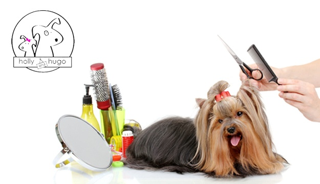 Dog Grooming Courses Ireland